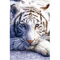 PP30282 WHITE TIGER